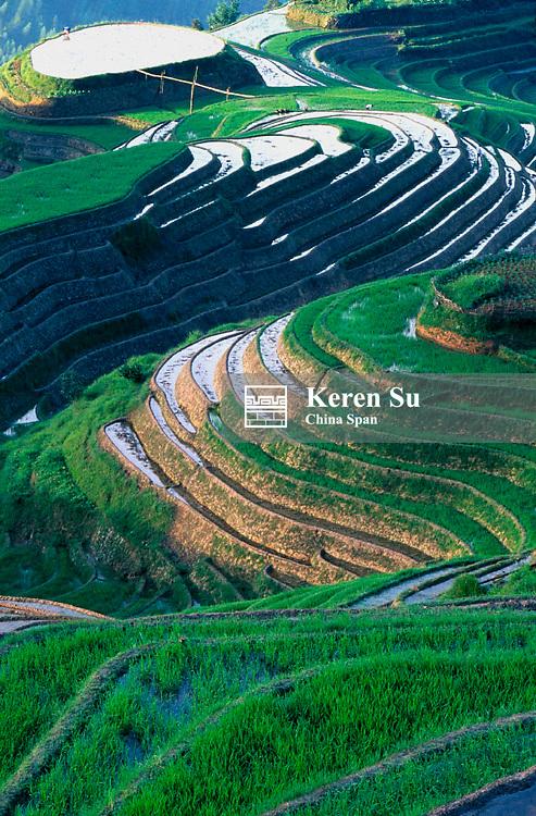 Terraced rice paddy in the mountain, Longsheng, Guangxi Province, China