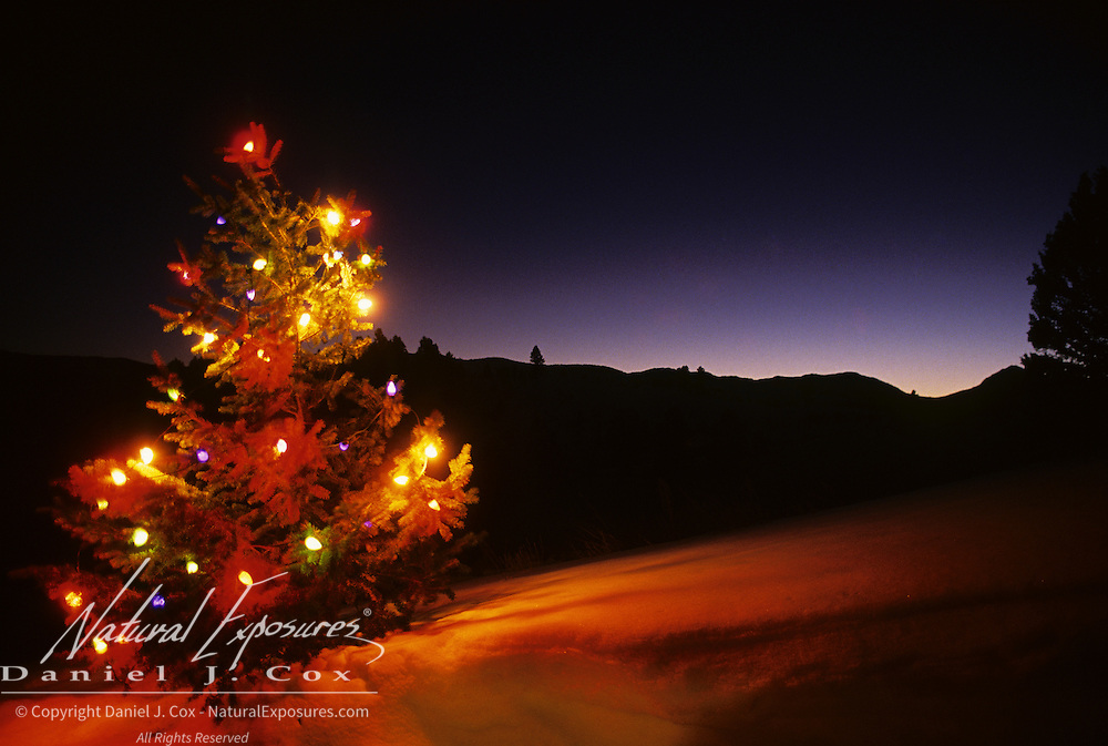 A Christmas tree decorated with brightly colored lights on a snowy hill side. Montana