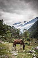 Horse feeding in a picturesque valley in the Annapurnas.