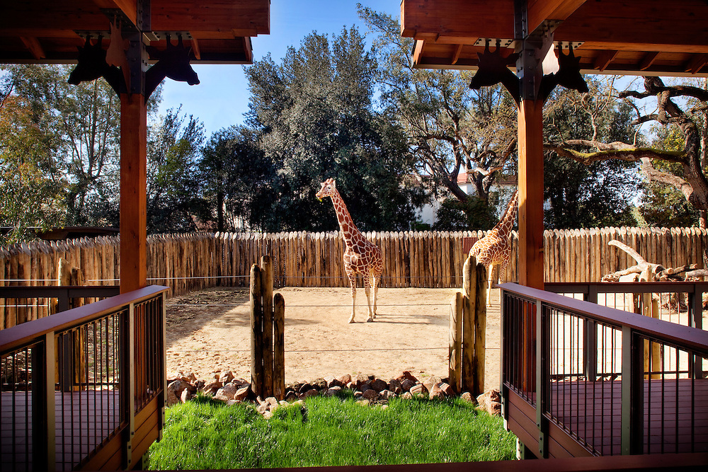 Giraffe Exhibit & Barn Photographed for Nacht & Lewis Architects, Otto Construction, & the Sacramento Zoo.