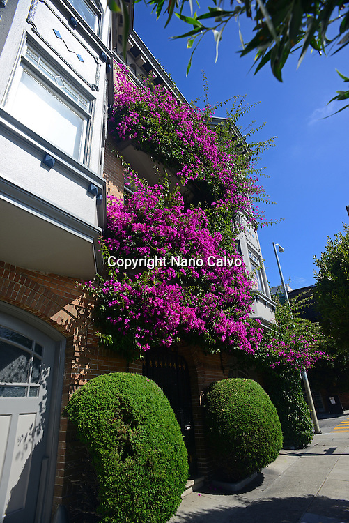 Purple flowers covering building in San Francisco.