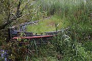 Rotting in the undergrowth near the harbour at Newport, Pembrokeshire, North-east Wales, lies an old rowing boat. The timbers are succumbing to the weather and tidal waters of the River Nevern and the boat is barely afloat in the waterlogged terrain. Weeds and other vegetation is gradually overtaking its integrity and its wooden frame is host to an abundance of plant and wildlife. It can no longer serve as a vessel of the river as it is a wreck that nature is reclaiming and soon to hide completely from view.
