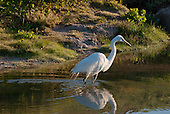 Florida Wildlife and Scenes - Click to enlarge or to order