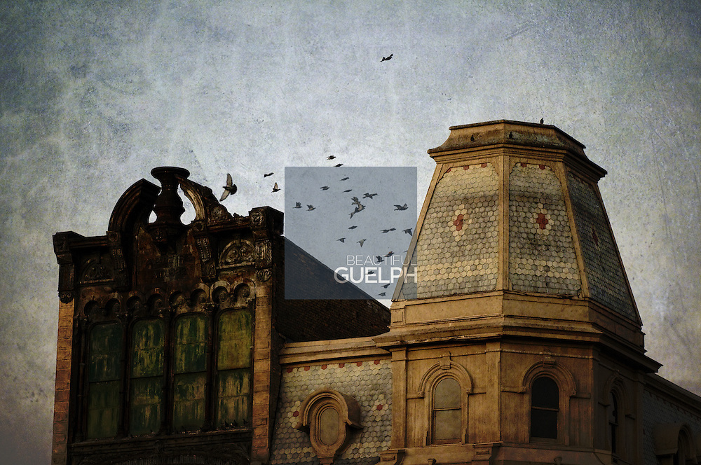 The Petrie building downtown Guelph is a much discussed historical building.  Here, pigeons take flight above it.  Photo by Ian Thomas