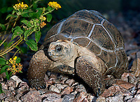 from the islands of the Aldabra Atoll in the Seychelles, from the islands of the Aldabra Atoll in the Seychelles,