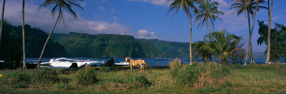 Horse, Keanae Peninsula, Hana Coast, Maui, Hawaii<br />