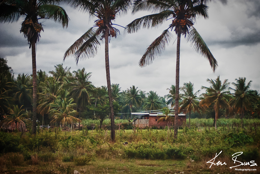 The Indian countryside scattered with palm trees on the main road between Mysore and Bangalore in the state of Karnataka.