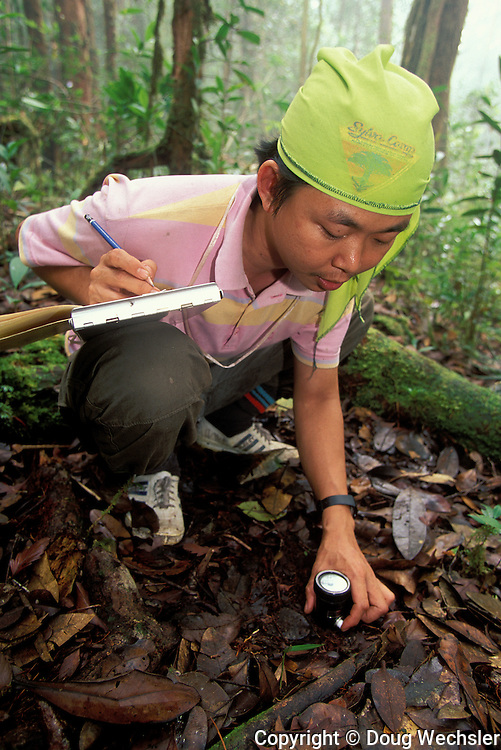 Forest ecologist measures ph of soil<br /> Borneo, Indonesia, W. Kalimantan Bentuang-Karimun N.P.<br /> 1997 ITTO Borneo Biodiversity Expedition<br /> September