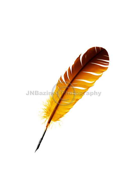 Big, bold, vibrant golden quill isolated on white background.