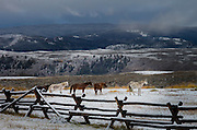 Horses in corral, Absaroka Ranch, Wyoming after snowstorm.