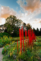 """Red Reeds"", Dale Chihuly Exhibition (blown glass), Denver Botanic Gardens, Denver, Colorado USA."