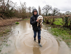 © Licensed to London News Pictures. 16/02/2020. Surrey, UK. A man carries his dog through flooding along the River Mole in Leatherhead. Flood barriers have been placed near homes along the River Mole in Leatherhead as the Met Office issue an Amber Alert for heavy rain in Surrey as Storm Dennis sweeps across the South East with high winds and more rain for Sunday. Photo credit: Alex Lentati/LNP