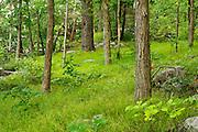 Tim's Trail, Buckner Preserve, West Haven, Vermont.