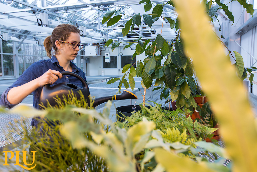Anna Dye '17, waters plants in the greenhouse at PLU on Wednesday, Feb. 10, 2016. (Photo: John Froschauer/PLU)
