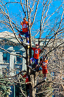 A tree full of young boys wearing # 18 jerseys (Quarterback Peyton Manning), Denver Broncos Super Bowl 50 Victory Parade, Downtown Denver, Colorado USA.