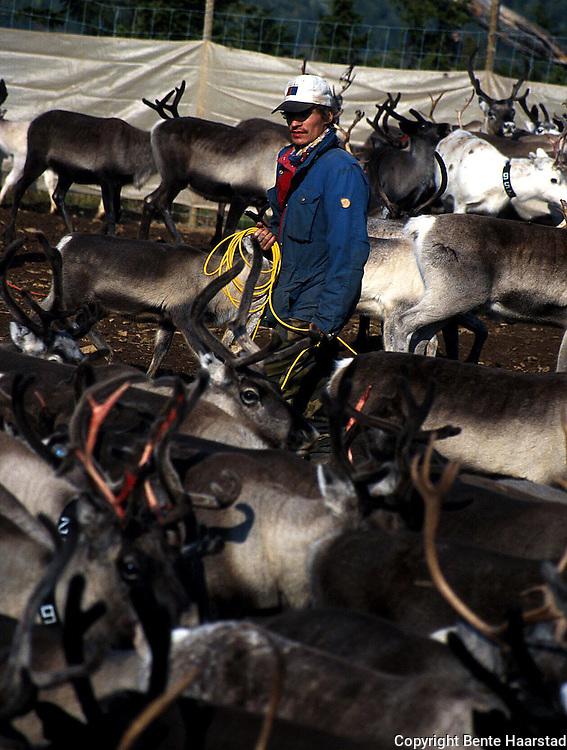 Gjertåsseter, Lierne.  Southsami reindeer herding in Mid-Norway. Luru reinbeitedistrik (Låarte Sijte).