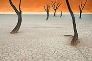Dead camelthorn trees, Acacia erioloba, Sossusvlei, Namib-Naukluft National Park, Namibia