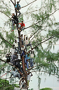 Lors de l'assermentation du nouveau pre?sident Jean-Bertrand Aristide,.des curieux sont juche?s dans un arbre aux abords du palais. Hai?ti..During the assermentation of the new president Jean-Bertrand Aristide, curious are perched in a tree around the palace. Haiti. 1991