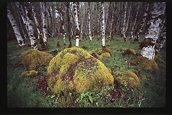 Hoh Rainforest, Olympic National Park, Washington, US