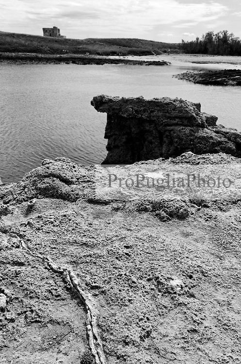 La riserva marina a Torre Guaceto viene istituita il 4 dicembre 1991 su incarico del Ministero della Marina Mercantile ed &egrave; situata sulla costa adriatica dell'alto Salento. Nel 2000, con decreto del Ministero dell&rsquo;Ambiente, la gestione viene affidata un consorzio composto dalle Amministrazioni Comunali di Brindisi e Carovigno, competenti per territorio,&nbsp; e l&rsquo;associazione W.W.F. Italia.<br /> L&rsquo;area si estende lungo un tratto di costa di 8 Km, compreso tra Punta Penna Grossa a nord e la zona Apani a sud. L&rsquo;area marina si estende per circa 2.200 ha ed &egrave; suddivisa in tre zone con diverso grado di tutela:  Zona A di Riserva Integrale, in cui &egrave; proibita qualsiasi attivit&agrave; antropica, Zona B di Riserva Generale, dove &egrave; consentita la fruizione e l&rsquo;uso sostenibile dell'ambiente, Zona C di Riserva Parziale,  dove &egrave; possibile svolgere anche le attivit&agrave; di pesca e la navigazione non a motore. La zona interna ha una profondit&agrave; di circa 3 km dalla costa verso l&rsquo;interno, ed &egrave; caratterizzata da un&rsquo;ampia zona umida, presenza di macchia mediterranea, oliveti e seminativi. La costa nord &egrave; caratterizzata da spiaggia e dune sabbiose, mentre a sud da falesia alta a roccia argillosa.