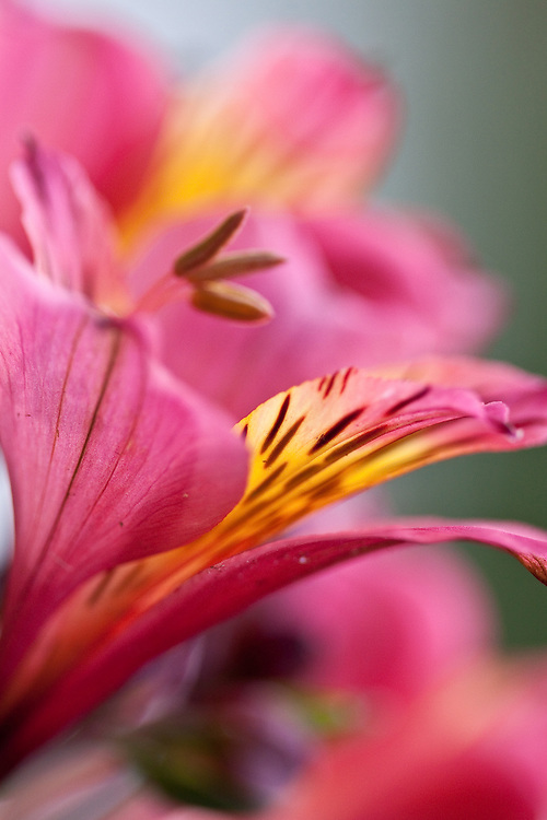 MACRO SHOTS OF FLOWERS