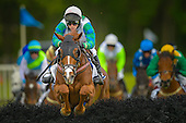 Steeplechase and Timber Racing