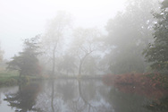 Muted autumn colours and fog over the lake in the Savill Garden, Windsor Great Park, Surrey, UK