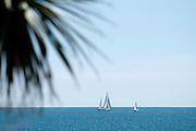 Gylly Beach sail and palms 01