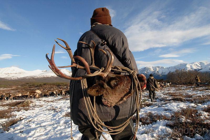 Reindeer men in the tundra. The Kamchatka Peninsula, Russia