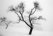 a bare tree in the snow