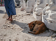 A dog naps in front of a storefront of Buddha statues. Mandalay, Myanmar.