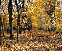 BB07029-03...INDIANA - Train through the forest at Chellberg Farm in Indiana Dunes National Lakeshore.