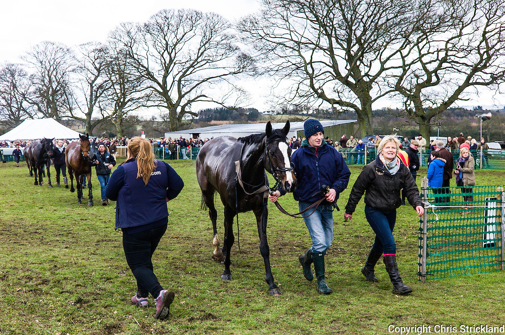 Corbridge, Northumberland, England, UK. 28th February 2016. OvertoSam leaves the winner enclosure after victory at he Tynedale Hunt annual Point to Point horse racing fixture.