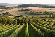Landschaft und Weinberge Groß-Umstadt, Odenwald, Naturpark Bergstraße-Odenwald, Hessen, Deutschland | landscape and vine yards Groß-Umstadt, Gross-Umstadt, Odenwald, Hesse, Germany
