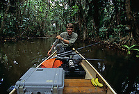 Photographer Tim Laman kayacking down Boom Creek.  Bloodwood trees grow along a stream in a mangrove swamp..Boom Creek, Belize.