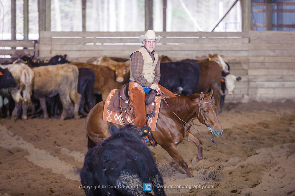 April 30 2017 - Minshall Farm Cutting 2, held at Minshall Farms, Hillsburgh Ontario. The event was put on by the Ontario Cutting Horse Association. Riding in the 1,000 Amateur Class is Alan Garnis on Qb Tilly Highbrow Cd owned by the rider.