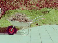Wheelbarrow in sunny garden