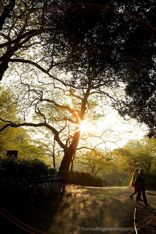 People walking in the park as te sun sets in the trees