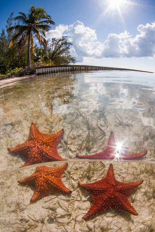 Honorable Mention, Professional Wide Angle category, Lions & Legends Grand Cayman Underwater Photo Contest 2015<br />