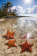 Honorable Mention, Professional Wide Angle category, Lions &amp; Legends Grand Cayman Underwater Photo Contest 2015<br />