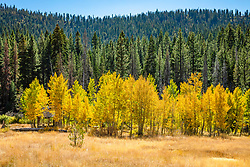 """""""Shack in the Aspens 12"""" - Photograph of an old shack among an aspen grove near the top of Highway 267, in between Truckee and Kings Beach, California."""