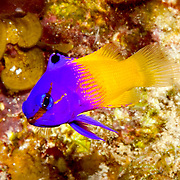 Our library of images includes thousands of macro underwater photos of species taken in their natural habitat.