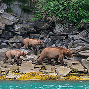 32 - Katmai National Park