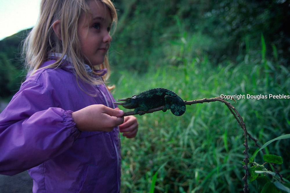 Girl with Jackson Chameleon (editorial use only-not model released)<br />