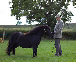 © Licensed to London News Pictures. <br /> 13/08/2014. <br /> <br /> Danby, North Yorkshire, United Kingdom<br /> <br /> A man stands with his miniature Shetland pony during judging at the Danby Agricultural Show in North Yorkshire. <br /> <br /> This year is the 154th show which was founded in 1848. It is the oldest agricultural show in the area and offers sheep dog trials, judging of a variety of different animals such as cattle, sheep, ferrets, horses and rabbits along with different classes of horticulture and dairy. <br /> <br /> Photo credit : Ian Forsyth/LNP
