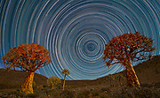 Night Sky Quiver Trees