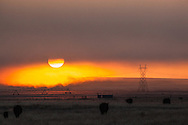 Early foggy morning in eastern Wyoming.