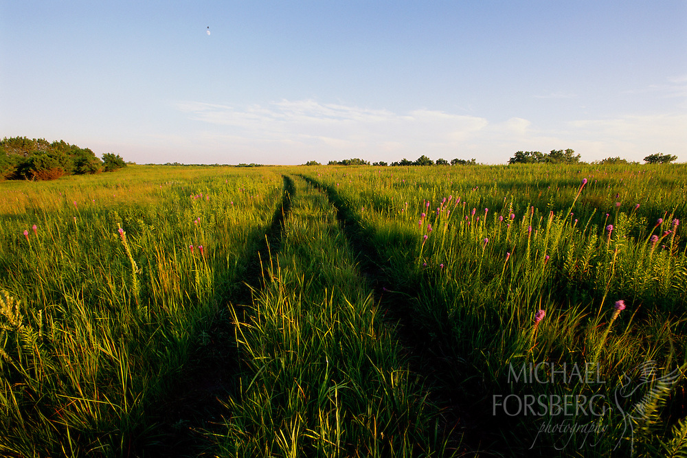 Tire tracks in the prairie.  Pawnee Prairie Wildlife Management Area, Nebraska.