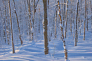 Deciduous trees on Brackenridge Road covered in snow<br />