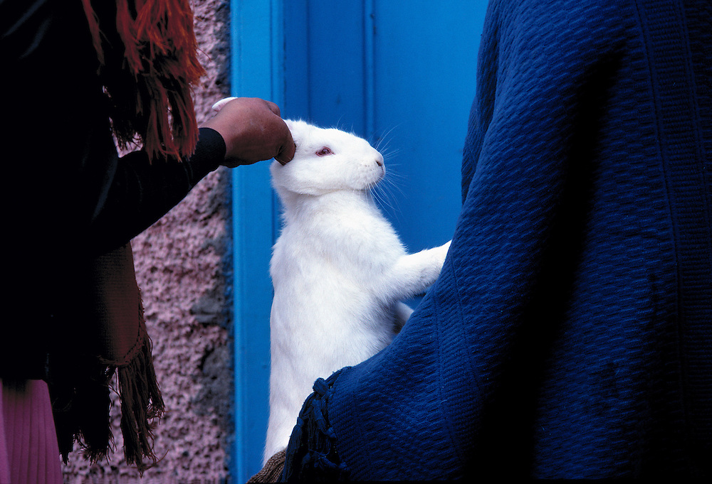 An unlucky white rabbit changes hands at Ambato Market, Ecuador.